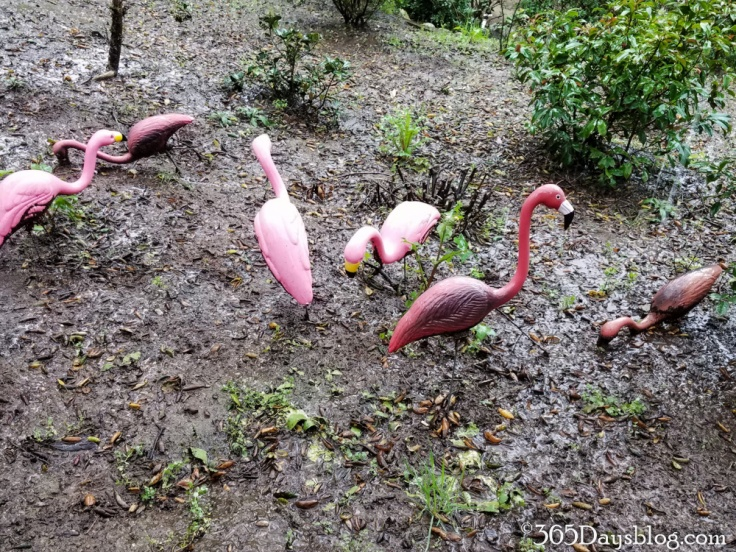 flamingos-1-of-1