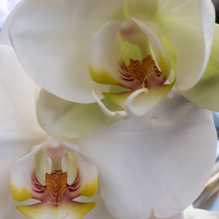 orchid-2 (1 of 1)