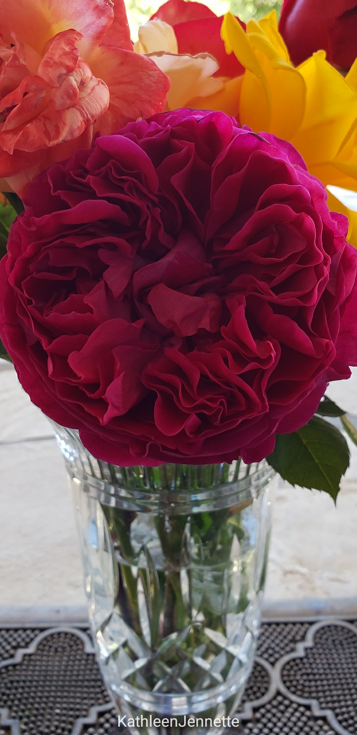 Old Fashion Red Rose